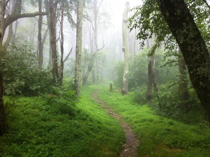 Shenandoah Mist