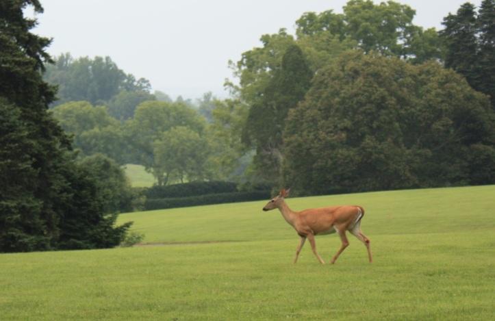 Montpelier Deer