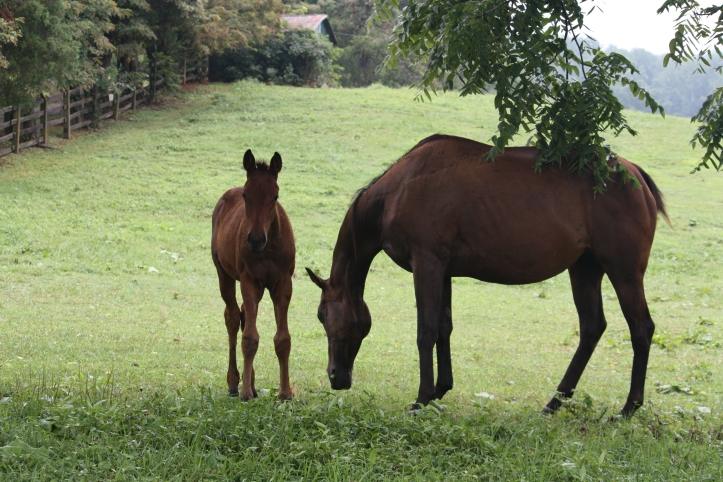Montpelier Horses