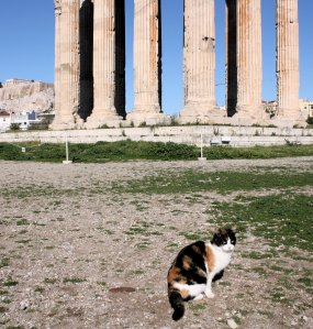 Cat at the Temple of Olympian Zeus