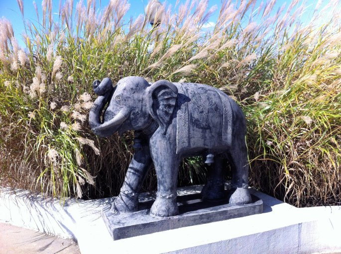 Elephant from India